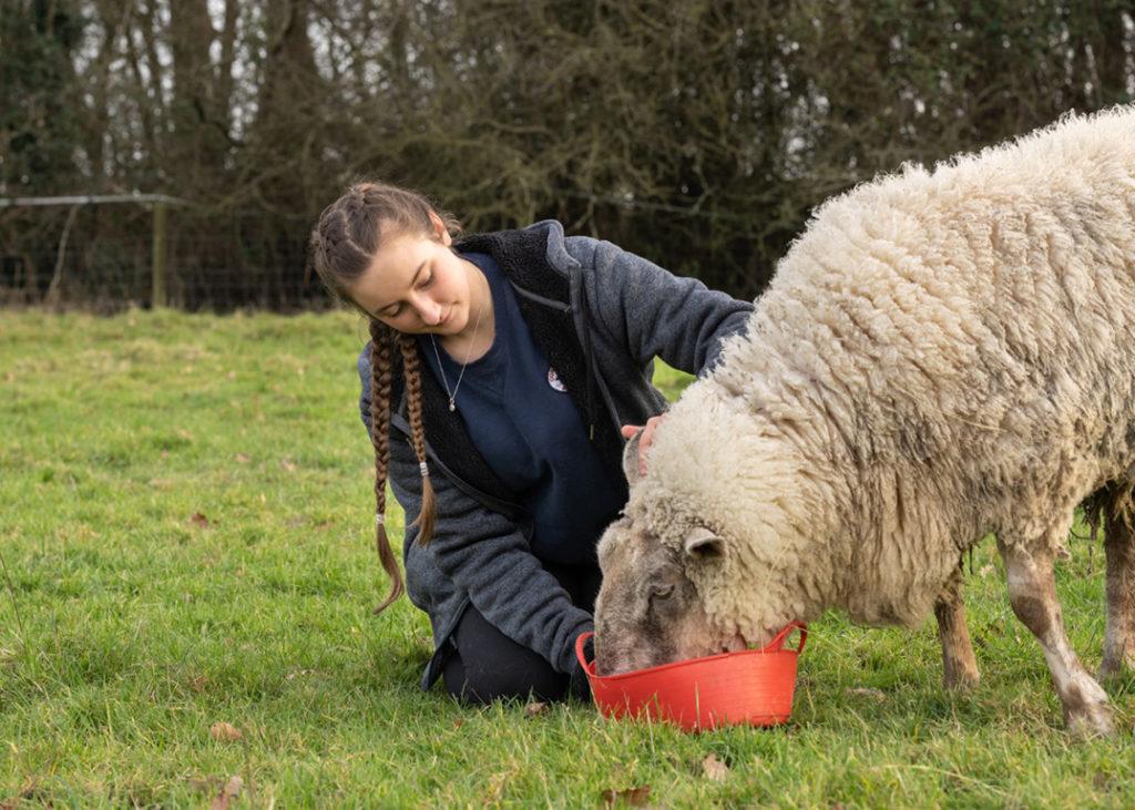 Amy Sanders feeding a sheep